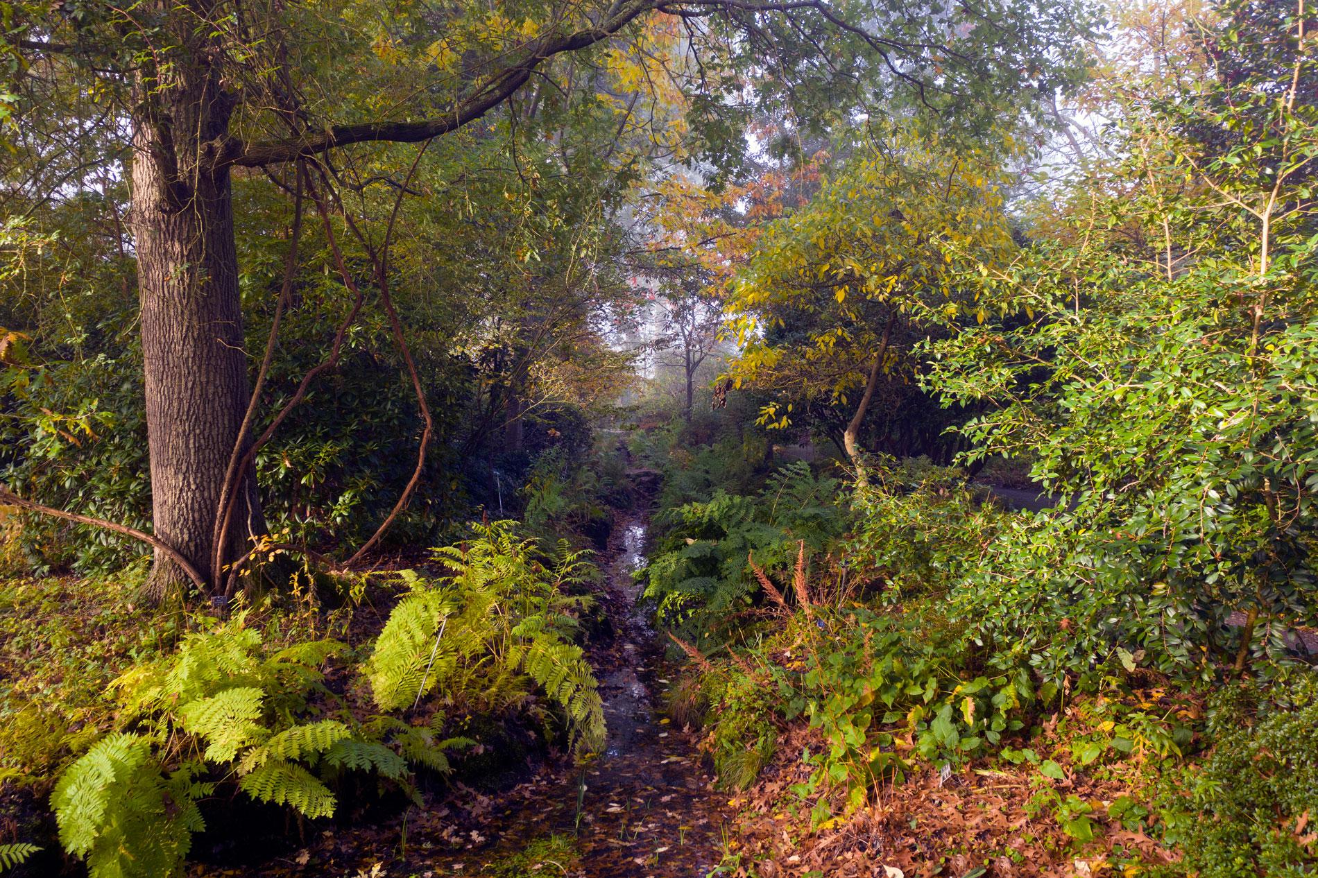 RHS Wisley in Autumn